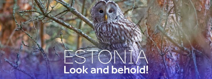 Estonia – look and behold